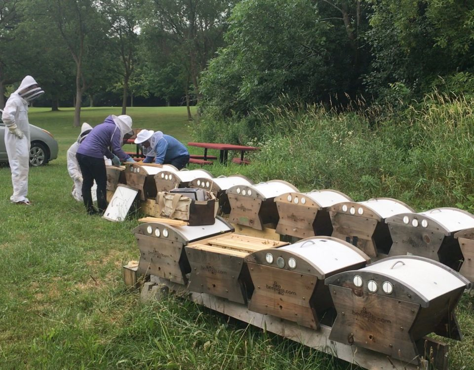 Beepods Hives