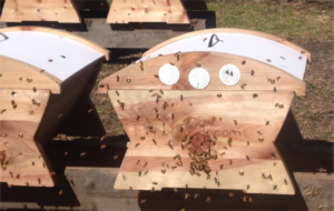 Beepods' Harvest box is ideal for storing your bees' honey for winter.