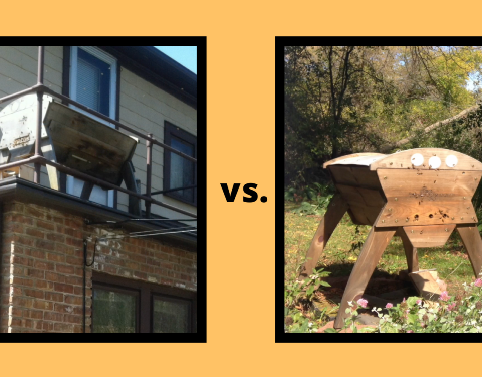 Urban vs. Rural Beekeeping