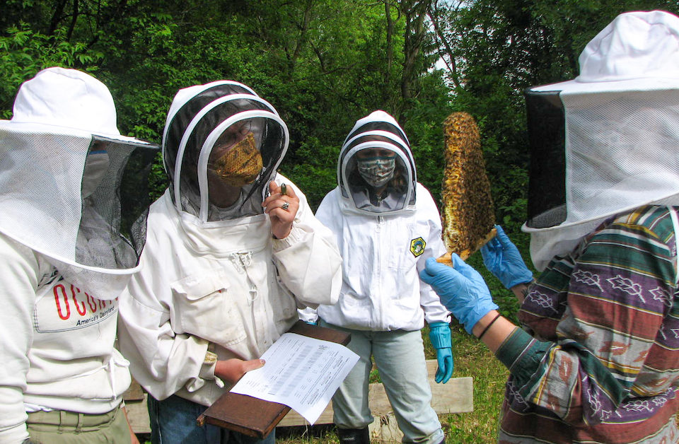 3 Crucial Reasons Beekeepers Should Track Their Hive Data