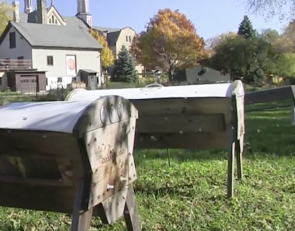 Our Fall Hive Inspection Tips will help you prepare your ladies for the cold days ahead.