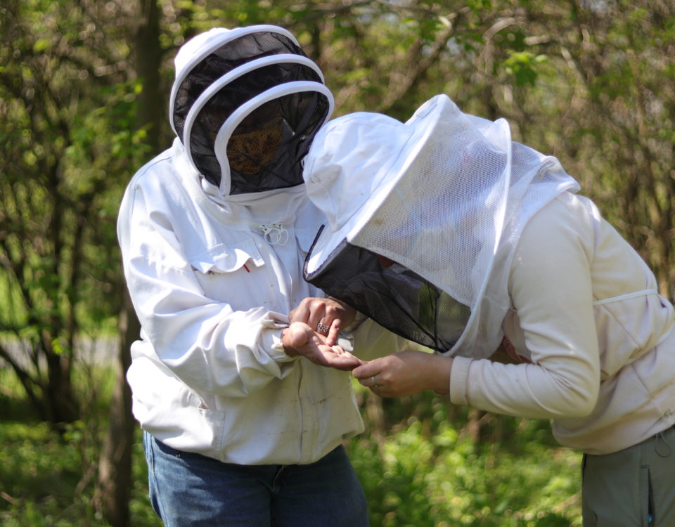 Connect with Local Beekeepers to Become a Better Beekeeper Yourself
