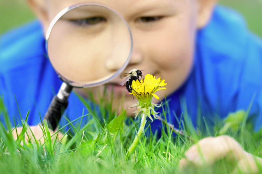 Boy looking at the bumblebee using magnifying glass,