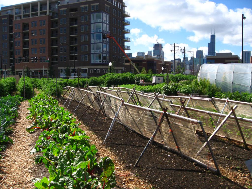 Urban Farm Example